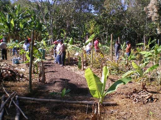 Biointensivo ecobase for Rotacion cultivos agricultura ecologica